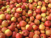 Apples Jonagold