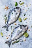 Fresh Fish Dorado. Raw Dorado Fish And Ingredient For Cooking. Fresh Fish Gilt-head Bream Dorade Wit poster