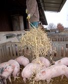 Pigpen Cleaning