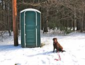 picture of outhouse  - Dog waits patiently outside the 