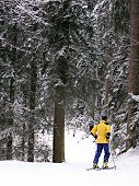 Ski In The Forest