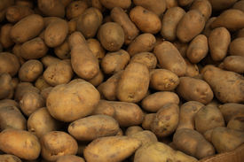 picture of potato-field  - A lot of potatos form up a background.