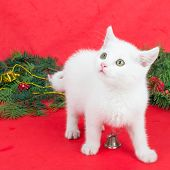White kitty with Christmas decoration on red background