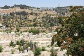 Mount Of Olives From The Walls Of Jerusalem.