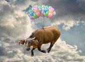 Cow Flying In Sky, Outdoors