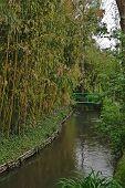 Bridge and Japanese Garden