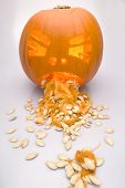 picture of puke  - This image shows a halloween pumpkin puking its guts out - JPG