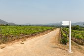 Grape Wine Vine Yard Green Field In South Of Thailand
