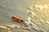 starfishes on wet sand at sunrise/sunset