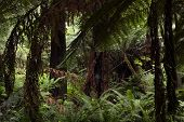 Yarra Forest