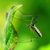 mosquito outdoor