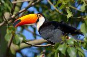 toucan outdoor