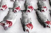 picture of ice fishing  - Salmon fish at market - JPG