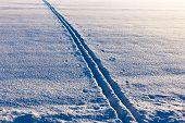 Ski Tracks In Evening Sun