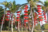 Red umbrellas are hung on the tree