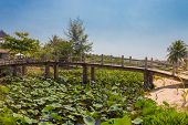Wooden Bridge Over A Pond With Lotuses