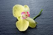 orchid over black stone