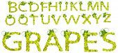Letters-Green Grapes Upper Case