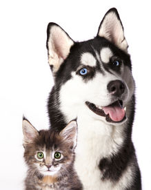 picture of coon dog  - Cat and dog - JPG