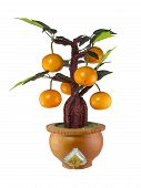 Orange Tree Model , Home Decoration