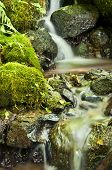 Closeup of water flowing over mossy rocks