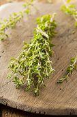 Raw Organic Green Thyme