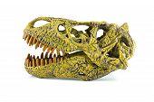 stock photo of tyrannosaurus  - Tyrannosaurus fossil head toy isolated on white - JPG