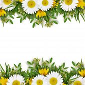 Summer Wild Flowers Edges