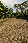 Long Brick Driveway In A Tropical Forest