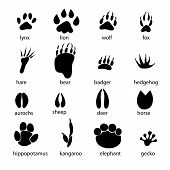 picture of animal footprint  - graphic set of animal footprints on a white background - JPG