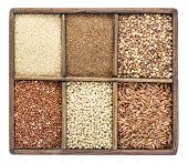 image of sorghum  - a variety of gluten free grains  - JPG