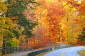 foto of veer  - A road and a path diverge in a glowing autumn woods - JPG