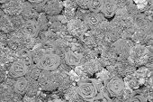 Background Of Flowers, Black And White Effect