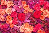 Background Of Multi Colour Flowers