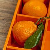 image of mandarin orange  - Tangerines or Mandarin orange in the orange box - JPG