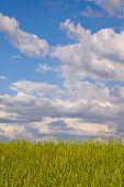 green spring rural field