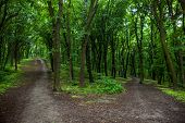 Parting Of The Ways In A Green Summer Forest