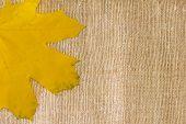 Autumn Leaf Background On Textile Texture