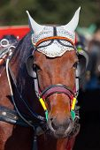 image of harness  - Portrait of a horse - JPG