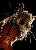 Degu Pet Musician