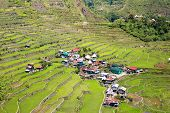 stock photo of rice  - Rice terraces in the Philippines - JPG