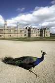 Kirby Hall Northamptonshire