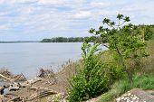 pic of serbia  - Beautiful big Danube in Kostolac in Serbia - JPG