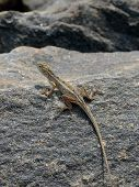 foto of lizard skin  - little lizard on the rock in nature detail vertical photo - JPG