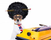 image of wig  - jack russell secretary dog typing on a typewriter keyboard isolated on white background wearing a crazy afro wig - JPG