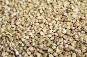 picture of buckwheat  - background of buckwheat   - JPG