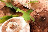stock photo of shroom  - Beautiful Mushrooms on white background - JPG