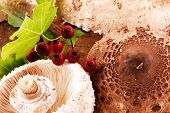 foto of shroom  - Beautiful Mushrooms on white background - JPG