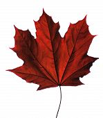 Stylized Maple Leaf