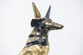 stock photo of jackal  - Egypt - JPG